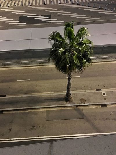 Parking Area Harbor Day No People Outdoors Growth Plant Palm Tree Built Structure Tree Architecture