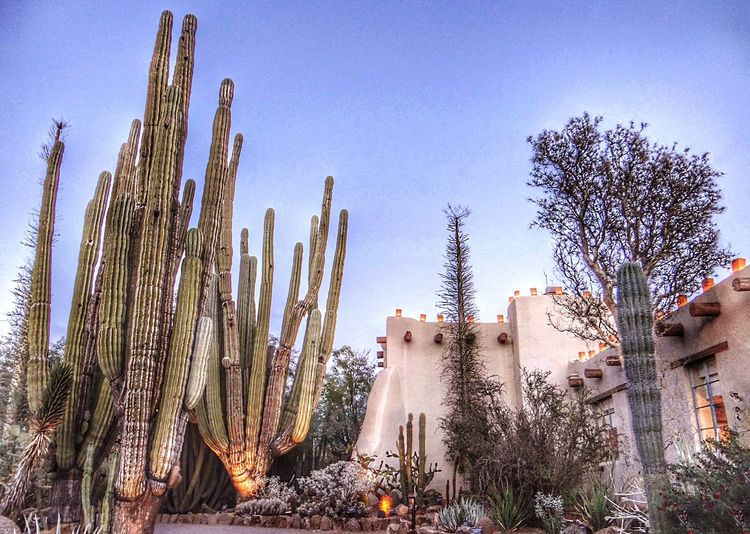 Adobe building, luminaries, multiple cactus varieties at the Phoenix Botanical Garden. Tree Outdoors No People Day Cactus Nature Clear Sky Saguaro Cactus Growth Architecture Sky (null)Backgrounds EyeEmNewHere Artiseverywhere Adobe Building Cacti Garden Luminaria Desert Botanical Garden Cactus Garden Botanical Gardens The Architect - 2017 EyeEm Awards Neighborhood Map