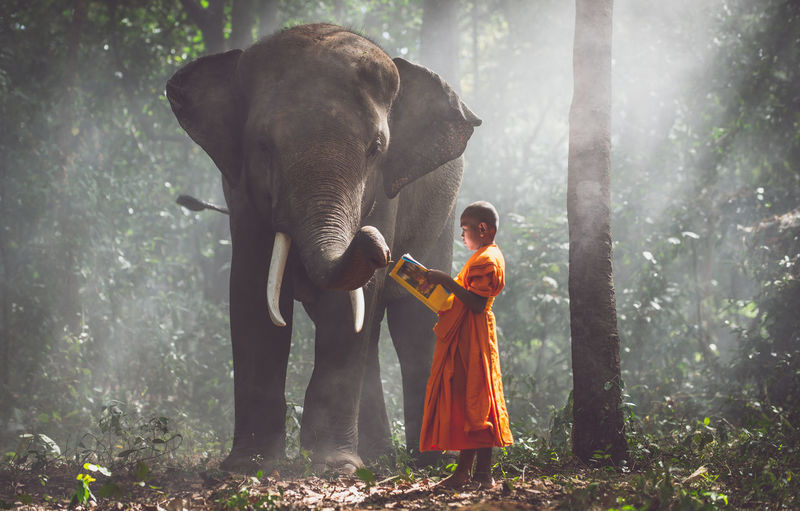Full length of monk with elephant standing on land in forest