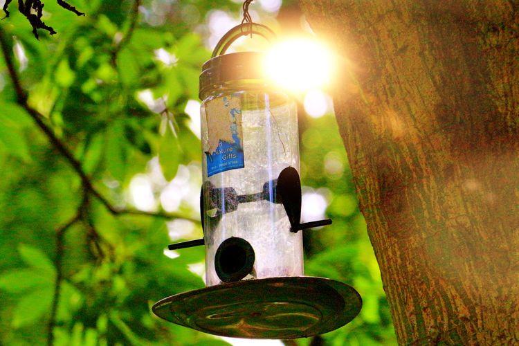 Sunshine clicks 😉 bird feeder 😃 Sunshine Green Color Bird Feeder Bird Feeder Hanging Empty Bird Feeder Sun Rays Park Green