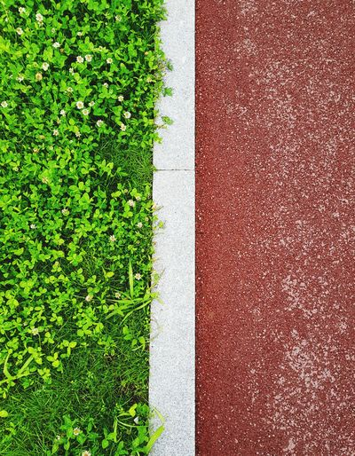 Lines Parallel Lines Asphalt Sidewalk Contrast High Angle View Playing Field Grass Green Color Plant LINE White Line Green Greenery Grass Area