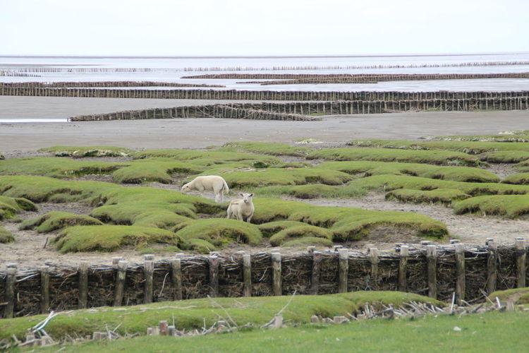 Dike landscape