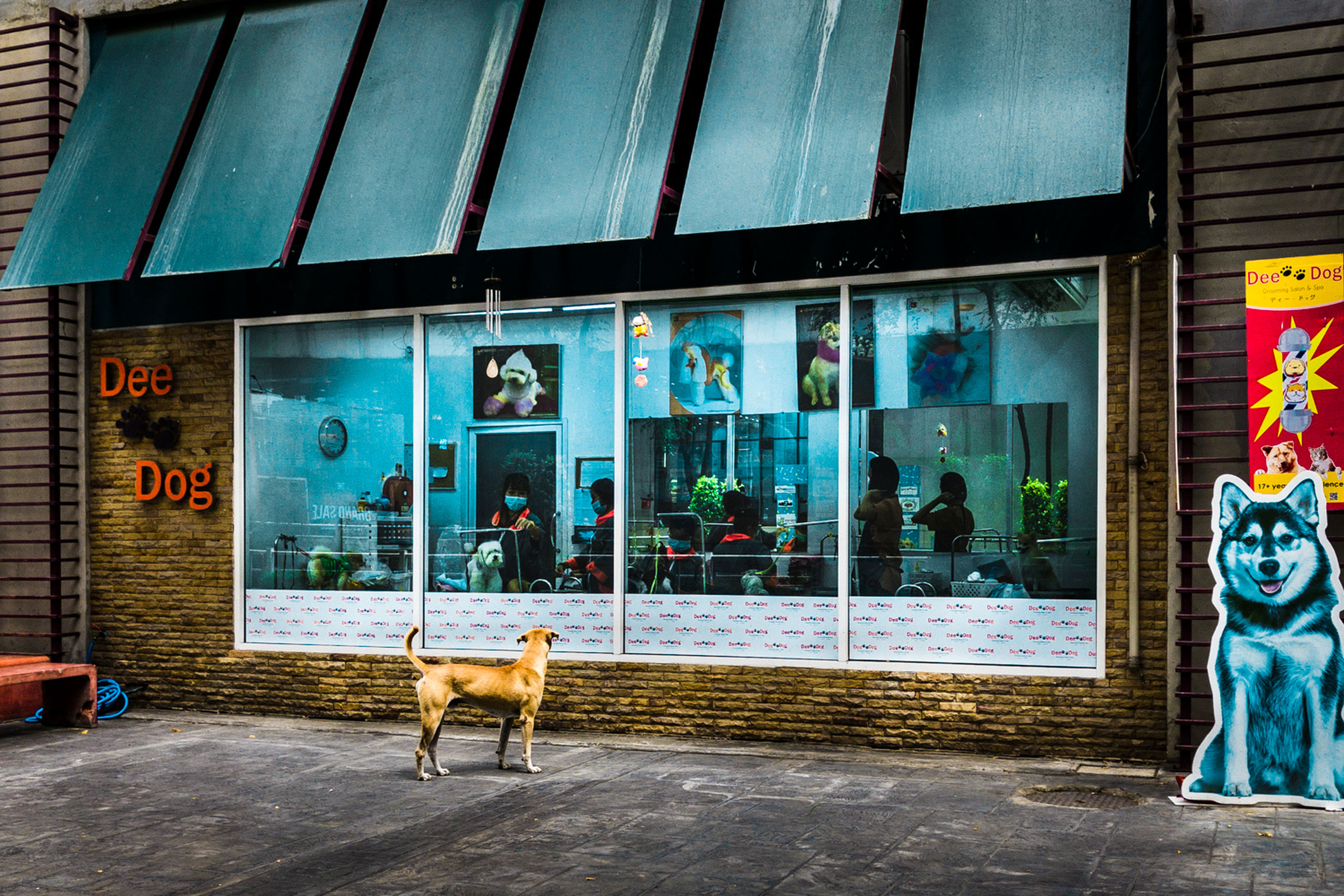 mammal, animal themes, domestic animals, animal, pets, one animal, domestic, building exterior, architecture, built structure, dog, canine, window, no people, vertebrate, building, day, glass - material, city, standing