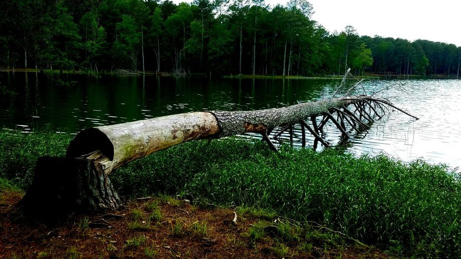 The Great Outdoors - 2017 EyeEm Awards Water Reflection Tree Outdoors Lake Nature Tranquility No People Grass Copyspace Tree Trunk Background Place Of The Heart Steadfast Enduring Log Tree Trunk Bark Textured  Surface Ripples Green Brown Breathing Space
