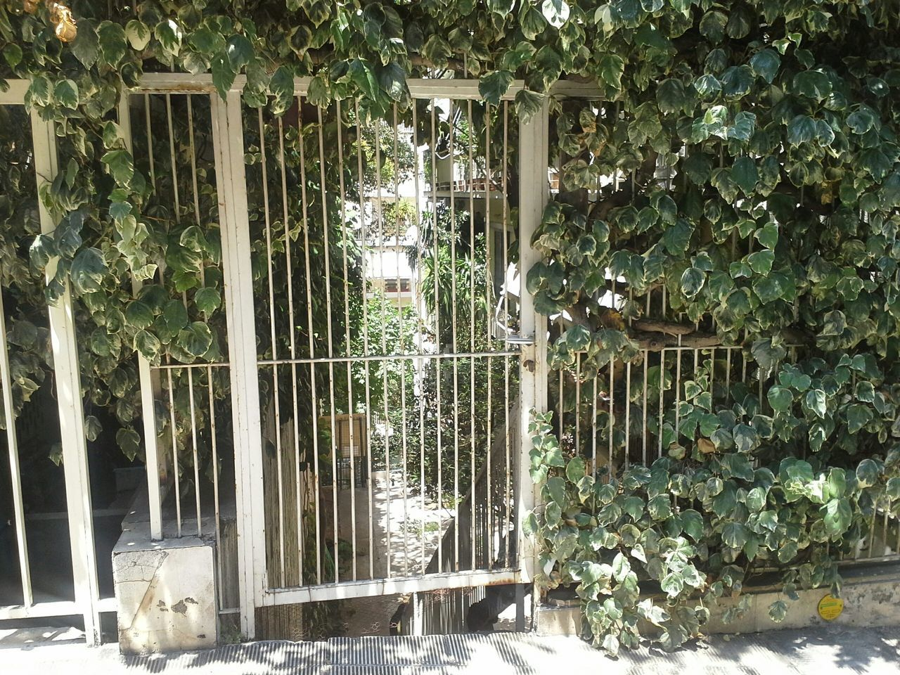 White Iron Gate With Plants
