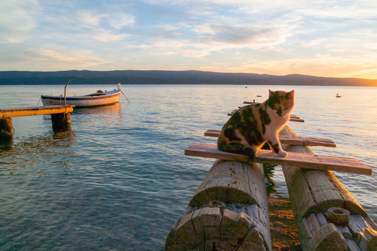 Tortoiseshell cat sitting on wooden structure at sea during sunset