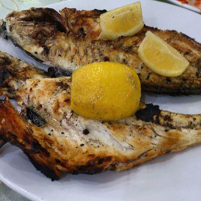 Fish Libya Tripoli حوت طرابلس ليبيا الوليمة