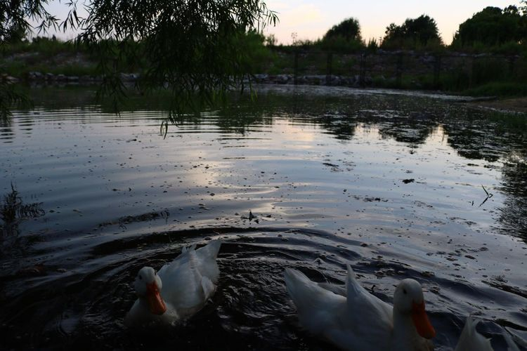 There's nothing more beautiful than nature ! Animals Bird Water Wildlife Lake Waterbird Nature Animal Beauty In Nature Outdoors Tranquility Avian