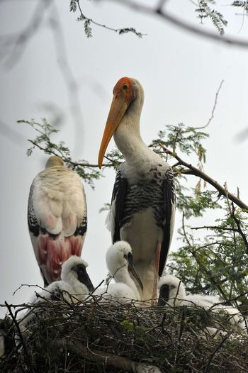 Low Angle View Of Birds With Young Ones