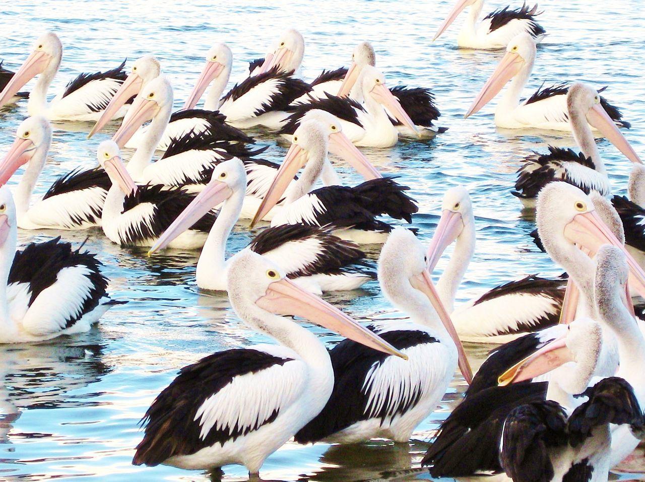 FLOCK OF BIRDS FLYING IN LAKE