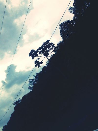 Cloud - Sky Day Sky Tree First Eyeem Photo