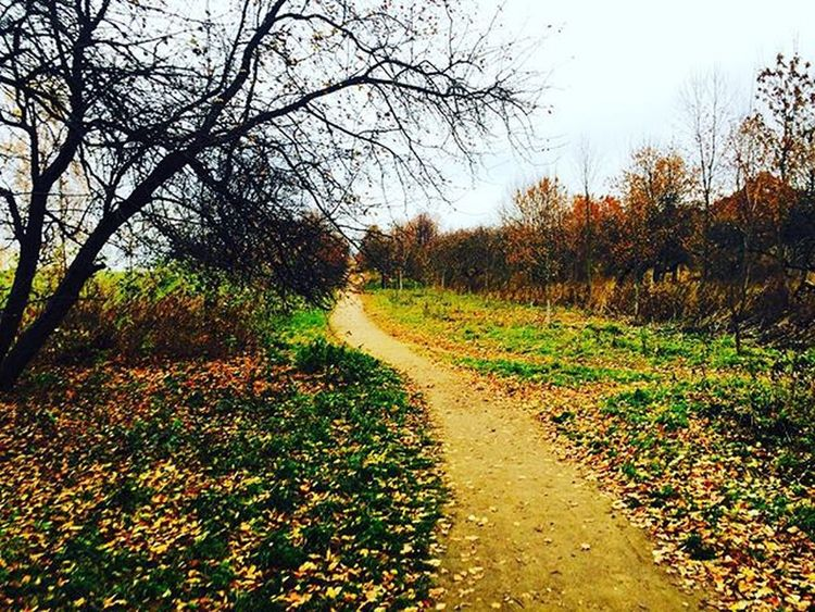 Minsk November Autumn осень Минск листопад вівторок ноябрь