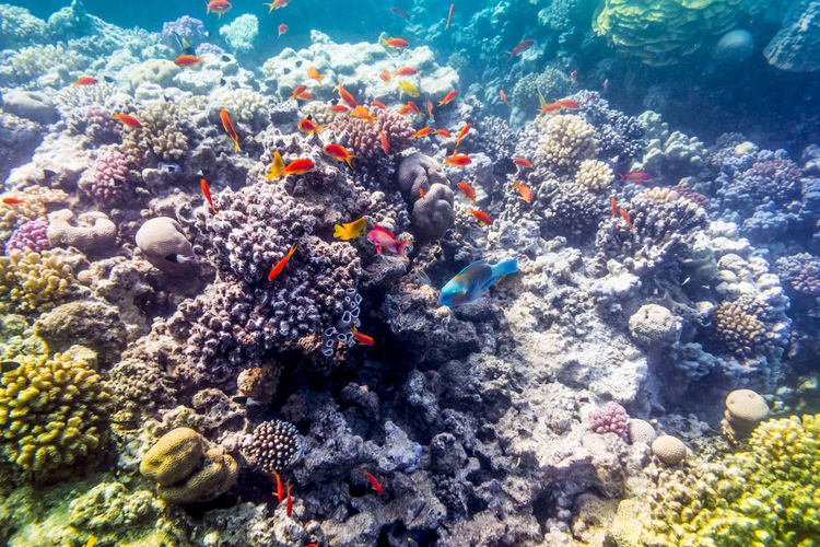 Fish swimming by coral in sea
