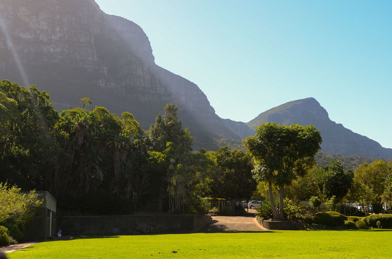 Kirstenbosch Botanical Gardens Beauty In Nature Clear Sky Day Environment Grass Green Color Growth Landscape Mountain Mountain Peak Mountain Range Nature No People Outdoors Plant Scenics - Nature Sky Sunlight Tranquil Scene Tranquility Tree