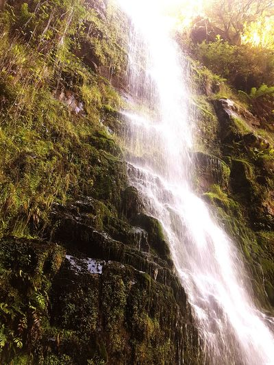 Nature Tree Beauty In Nature No People Water Day Scenics Low Angle View Green Color Outdoors Backgrounds Sky Close-up Freshness Waterfall Tropical Climate