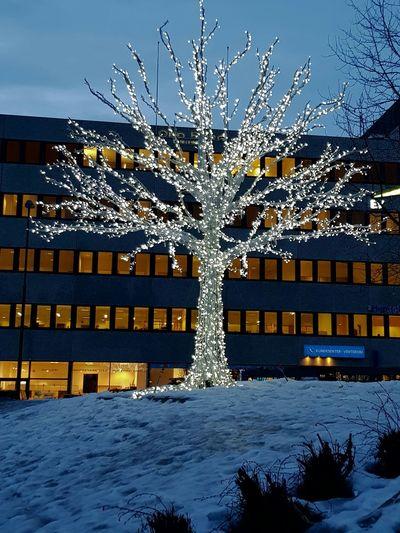 Snow ❄ Norway🇳🇴 Tromsø Tree Illumination Night Illuminated Winter Snow Cold Temperature Outdoors No People Architecture City