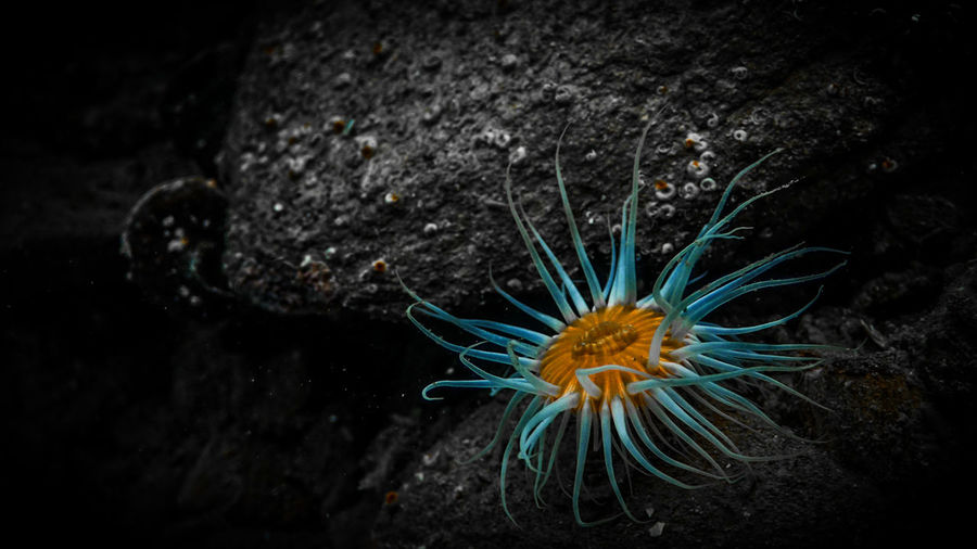 Sea Anemone , Port Gore, New Zealand. Animal Themes Animal Wildlife Animals In The Wild Close-up Day Love Our Oceans Nature No People One Animal Outdoors Sea Sea Life UnderSea Underwater Water