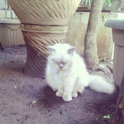 Androidind Kucing Leboye