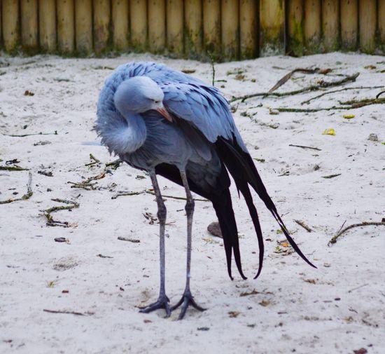 Wild bird Bird