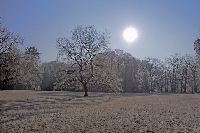 Bamberg  Bare Tree Beauty In Nature Branch Clear Sky Cold Temperature Day Hain Bamberg Landscape Nature No People Outdoors Scenics Sky Sun Tranquility Tree