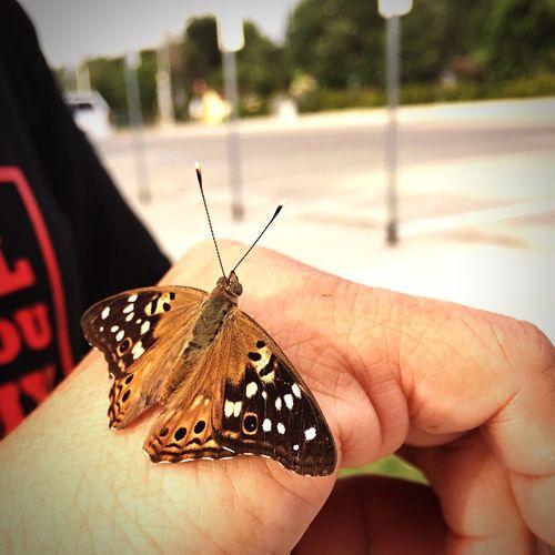 Butterfly Landing First Eyeem Photo
