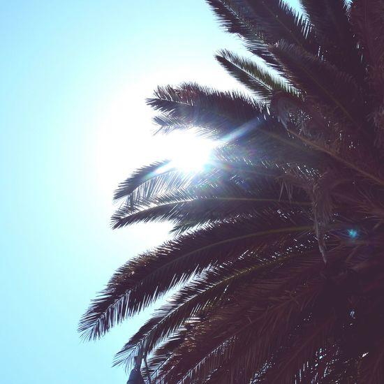 S T T R O P E Z France Sun Plage Mer Mediterranée La Cote D'Azur Palms