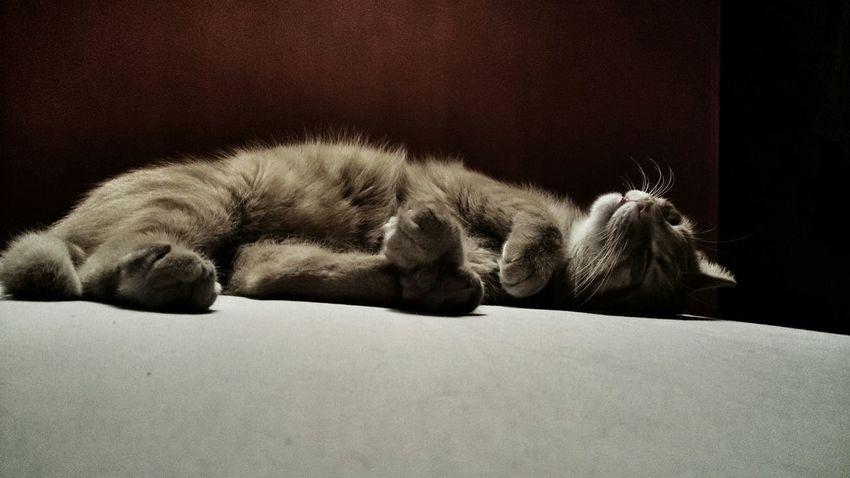 Cat ♡ Kotor Rudy Kot Rocki