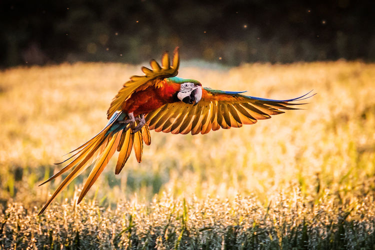 Close-up of bird flying over field