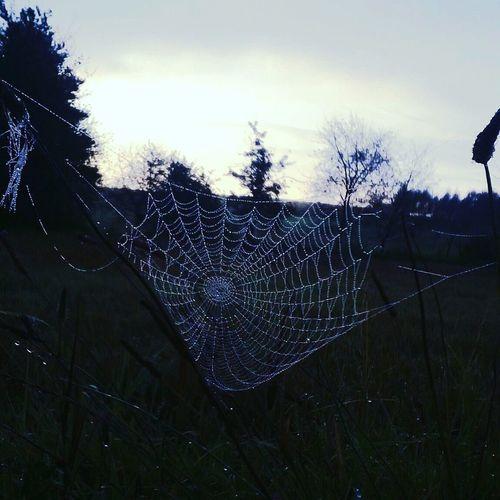 Nokia520 Wspomnienia Pajęczyna Spider's Web Walk In My City Nowy Sacz Photoart Inspired