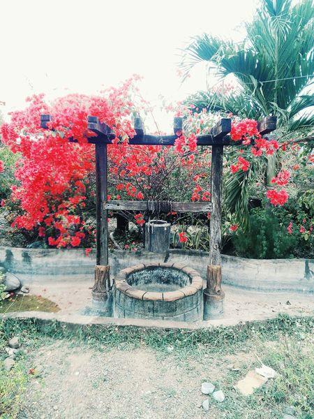 Wish you well at wishing well. First Eyeem Photo Well  Wishing Well Beautiful Flowers