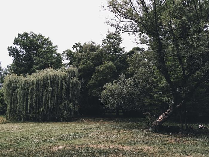 Tree Growth Nature No People Tranquility Beauty In Nature Branch Day Grass Sky