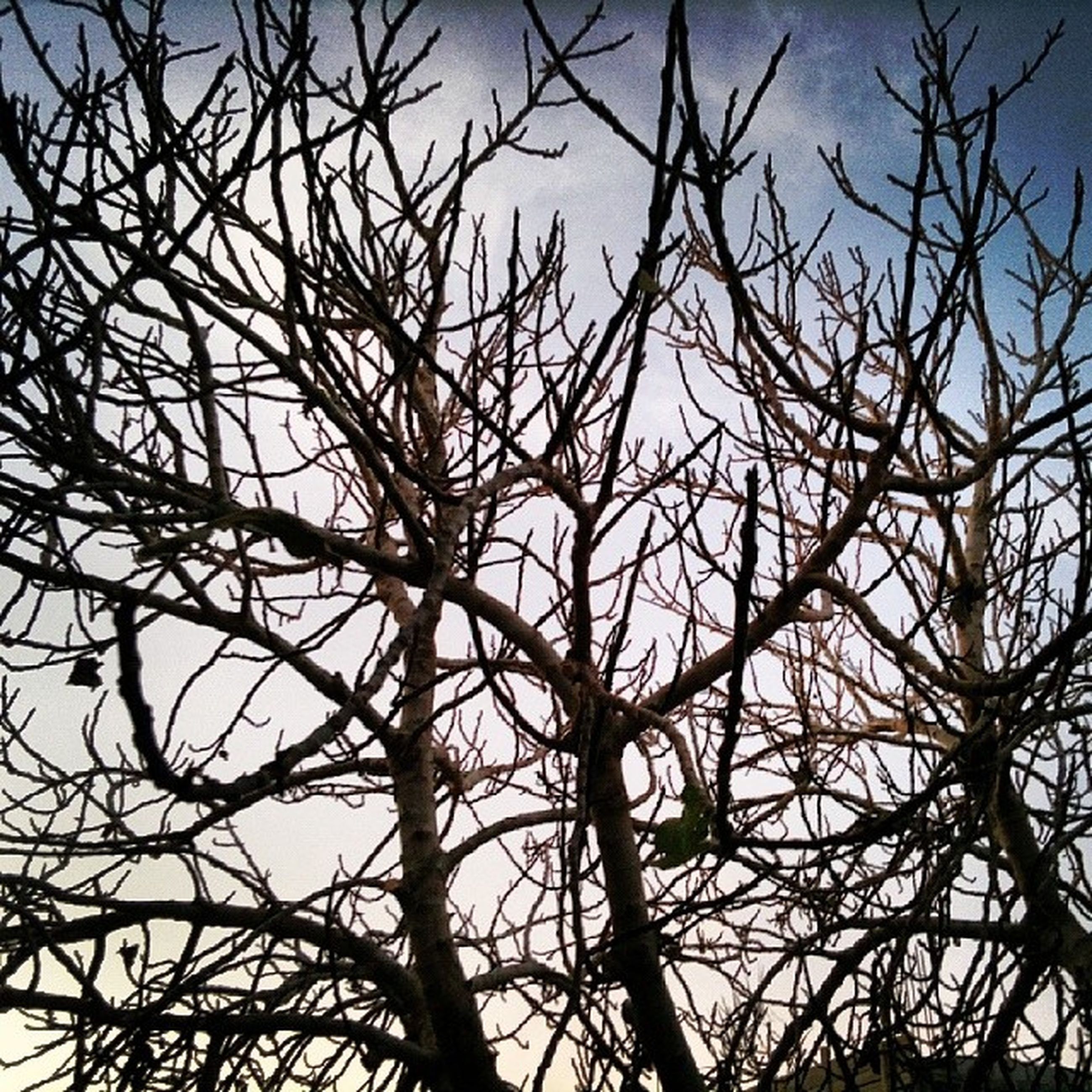 bare tree, branch, low angle view, tree, nature, sky, silhouette, tranquility, clear sky, backgrounds, full frame, beauty in nature, outdoors, no people, day, growth, dried plant, dead plant, scenics, close-up