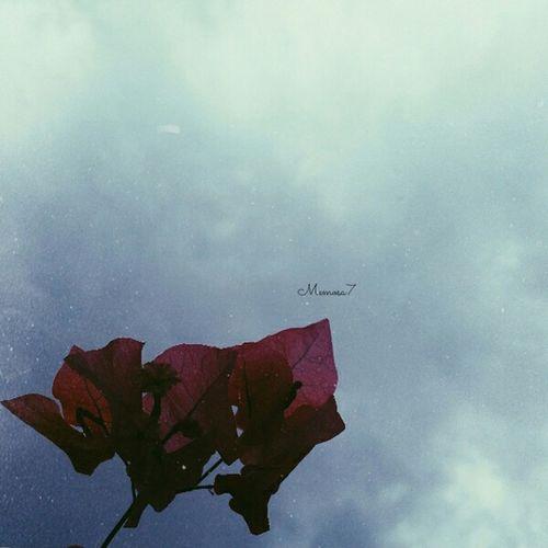 الروائح في الشتاء أكثر جمالًا قهوه .. مطر .. وكثيرٌ من الحنين ❄☁? Taken By Me تصويري 🙊💘.