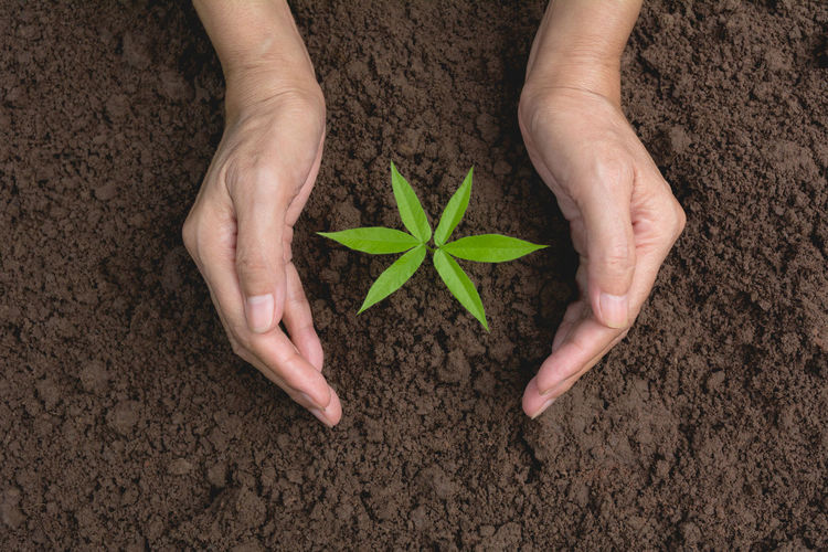 Care Close-up Directly Above Dirt Finger Fragility Green Color Hand Hands Cupped High Angle View Holding Human Body Part Human Hand Land Leaf Nature One Person Plant Plant Part Planting Shape Small Star Shape Vulnerability