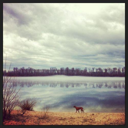 Dog Rhodesian Ridgeback EyeEm Best Shots Fog On The Lake
