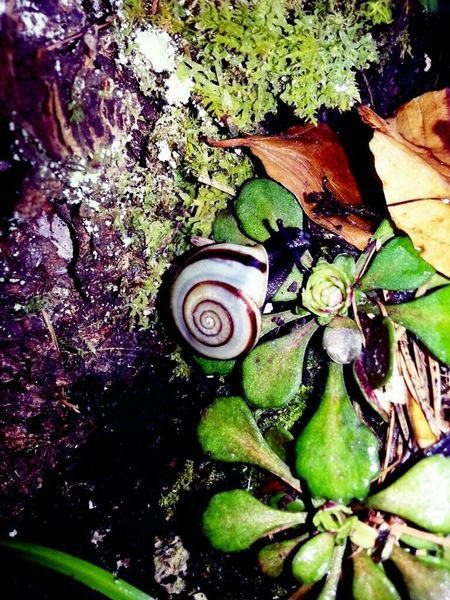 In The Forest Mountains Nature_collection EyeEm Best Shots - Nature Snail🐌 Snail EyeEm Nature Lover Forest My Home Nature Photography