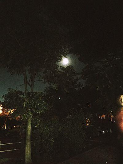 Night Tree Sky Outdoors Moon
