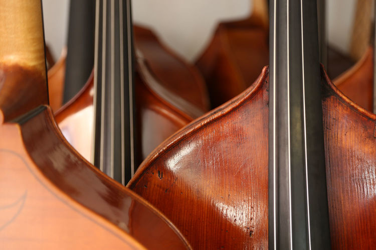 Lots of double basses at a luthier's Arts Culture And Entertainment Brown Classical Music Close-up Day Indoors  Music Musical Instrument Musical Instrument String No People Violin String Bass Double Basses Double Bass Bassbauer Luthier Kontrabass Jazz Strings Of Music Instrument Maker String Instrument