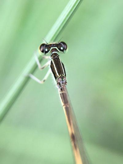 Damselfly Macro Photography Macroinsects Nature Photography Garden Photography