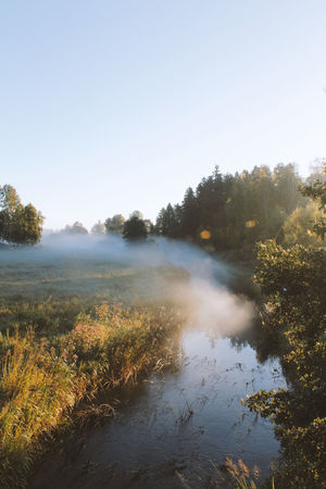 Autumn morning Autumn Autumn Collection Beauty In Nature Dew Fog Fuktiga Gods Rays Haze Höst Höstmorgon Jakt Meadow Mist Morning Morning Light Nature No People No People, Oak Pine Rays Of Light Rays Of Sunshine Sweden Tranquility Västergötland