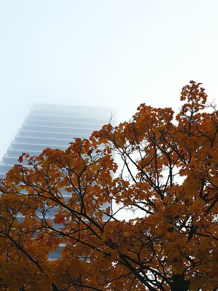 morning views Fog Foggy Foggy Morning EyeEm Best Shots Hamburg Mundsburg Mundsburgtower Urban Nature Autumn Fall Herbst Herbststimmung Autumn Colors Fall Colors Urban Urbanphotography Tree Baum Outdoors No People Beauty In Nature Sky Nebel Morning Open Edit