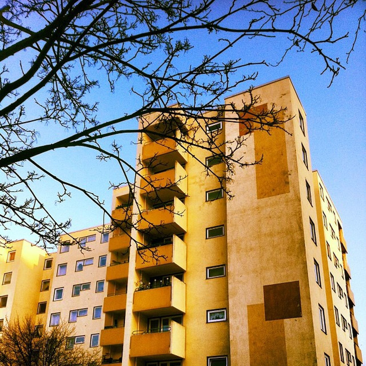 architecture, building exterior, low angle view, built structure, day, no people, outdoors, tree, sky, branch, city