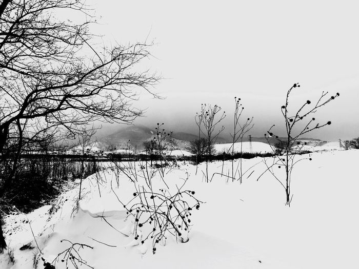 Bare Tree Winter Tree Cold Temperature Nature Snow Tranquility No People Branch Beauty In Nature Outdoors Day Tranquil Scene Sky Clear Sky Scenics Monte Vulture Lucania Snow ❄ Basilicata