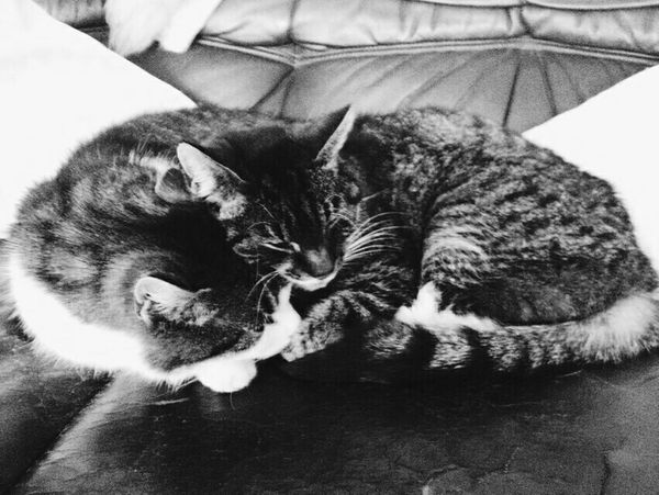 My sweet cuddling cats. | Taking Photos Vscocam Ruhrgebiet Cats |