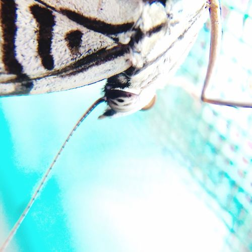 Moth Mothernature Close-up Amazone Insects  Pattern, Texture, Shape And Form Travel Photography Colombia Traveling Insect Photography Photography In Motion Nature's Diversities