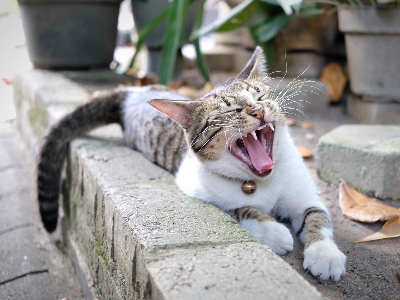 Close-Up Of Cat Yawning In Yard