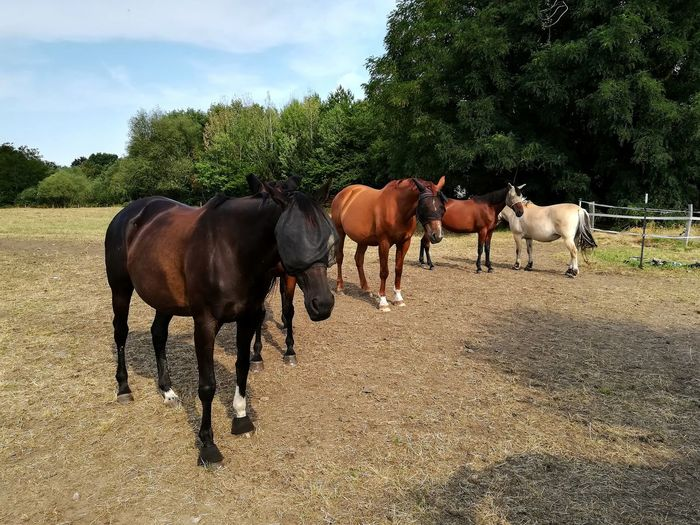 Horses standing in ranch