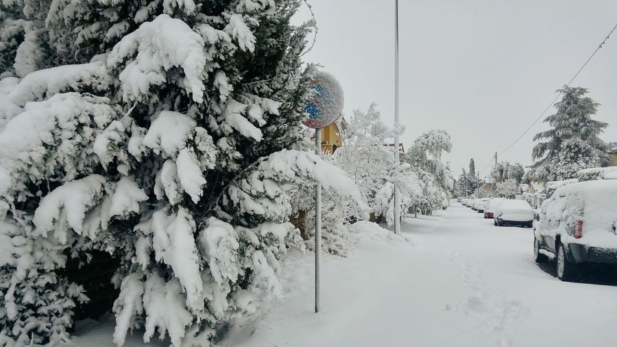 Nevicata 2018 Cold Temperature Snowflake Sky Foggy Extreme Weather Deep Snow Blizzard Powder Snow Weather Condition Snow Covered Cold Pine Tree
