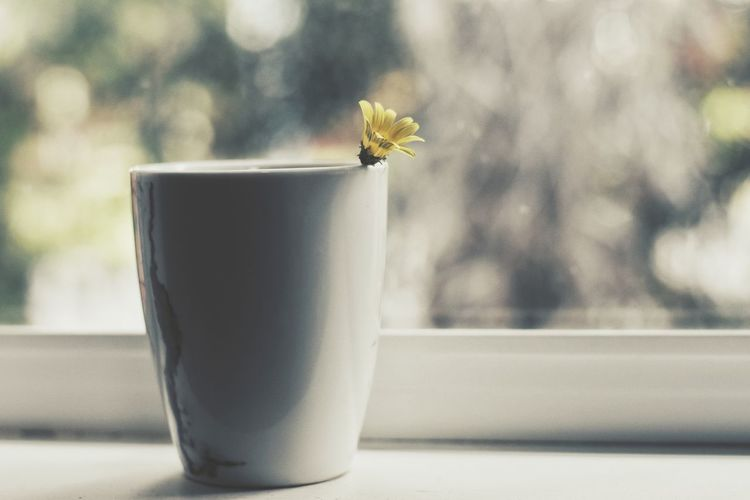 Flower Close-up No People Day Indoors  Paint The Town Yellow Coffee Cup The Week On EyeEm EyeEm Selects Freshness Flower Head EyeEm Nature Lover Plant Herb Plant Part Freshness Vase Growth Fragility Beauty Closing