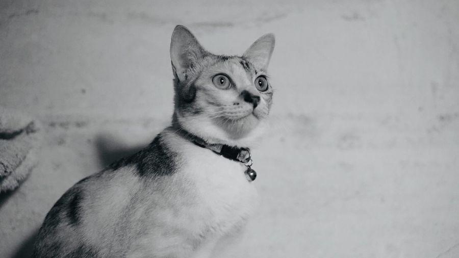 Samsee 😻 Pets